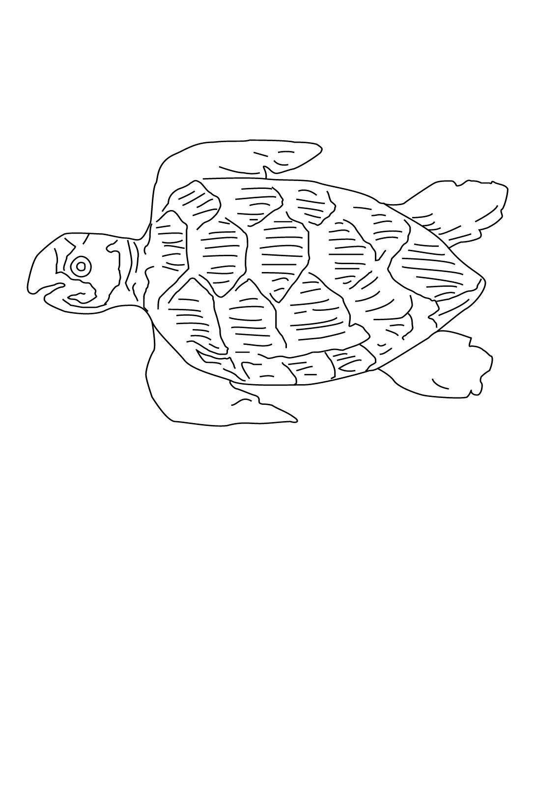 Coloriage Animaux marins #234 (Animaux) - Coloriages à imprimer