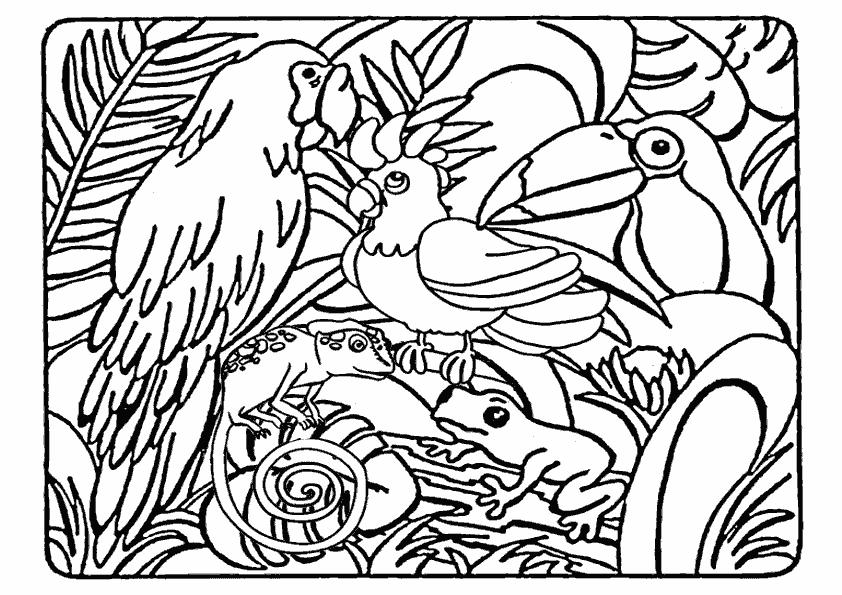 Coloriage Animaux Sauvages De La Jungle 21082 Animaux Album De Coloriages
