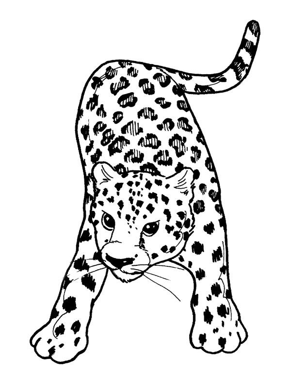 Coloriage Animaux sauvages / de la jungle #19 (Animaux ...