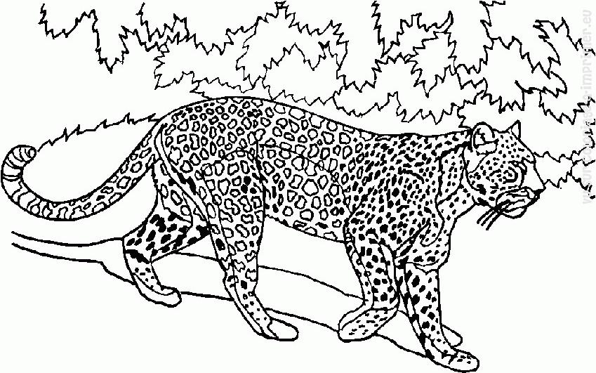 Coloriage Animaux sauvages / de la jungle #135 (Animaux ...