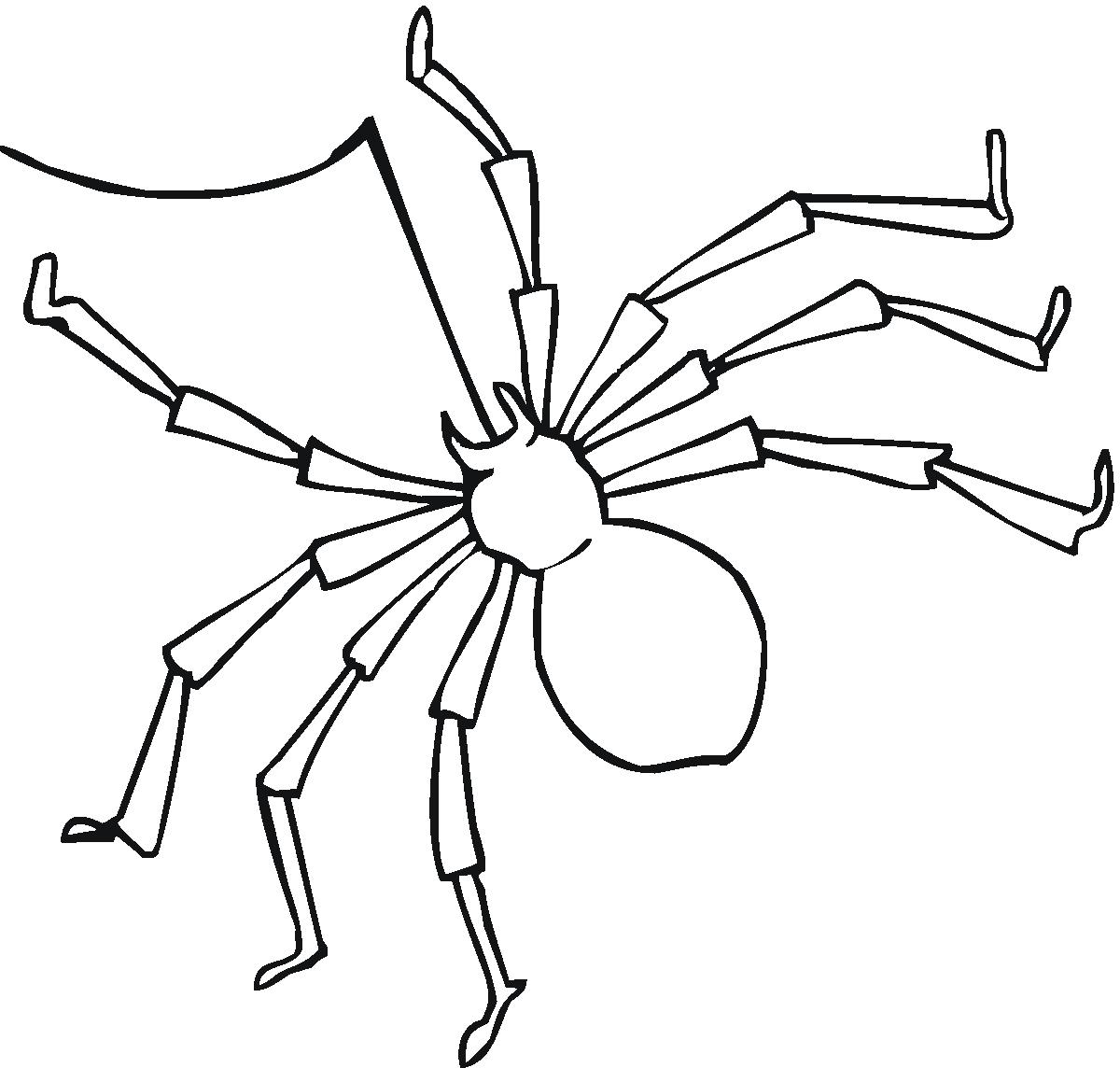 Coloriage Araignée #597 (Animaux) - Album de coloriages