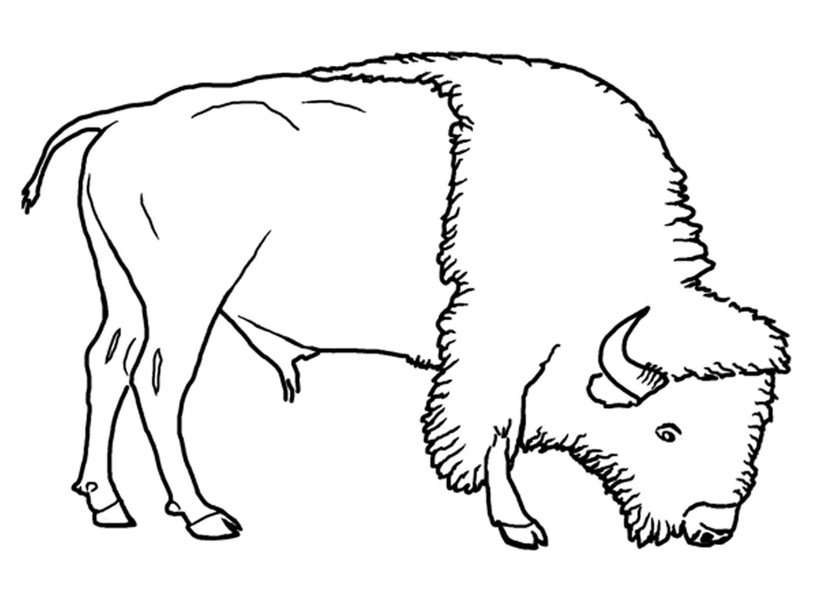 Coloriages Bison (Animaux) - Album de coloriages