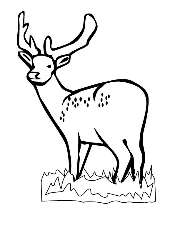 Coloriage Chevreuil #32 (Animaux) - Coloriages à imprimer