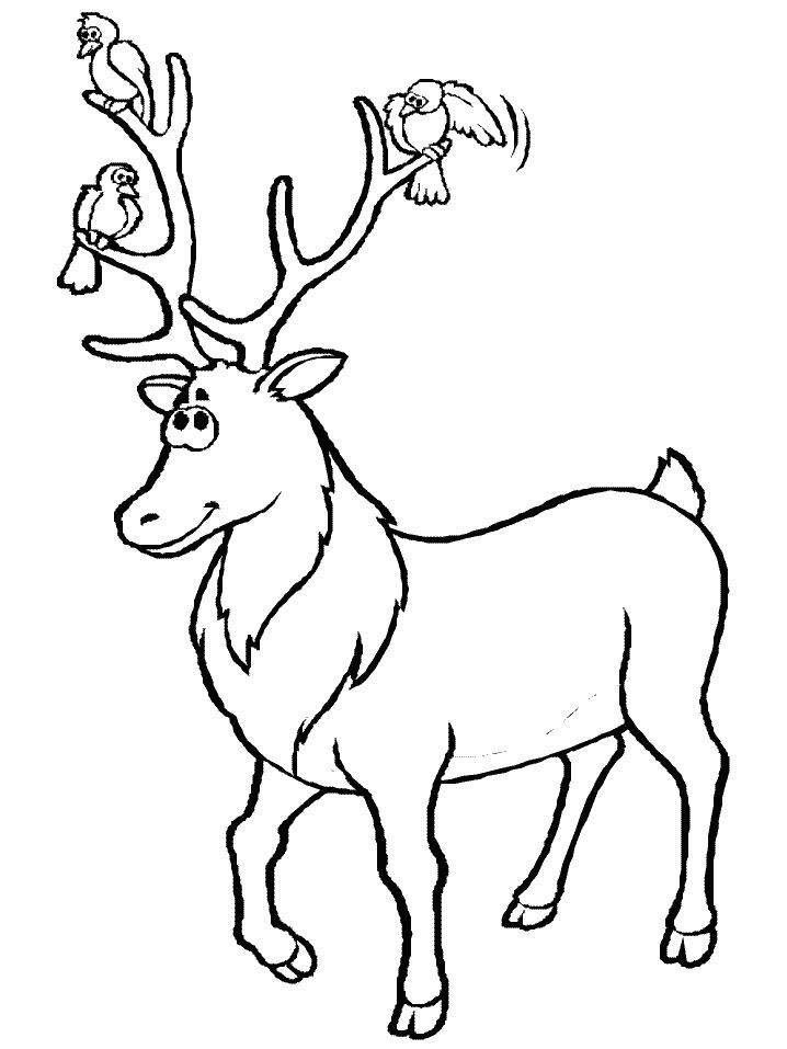 Coloriage Chevreuil #51 (Animaux) - Coloriages à imprimer