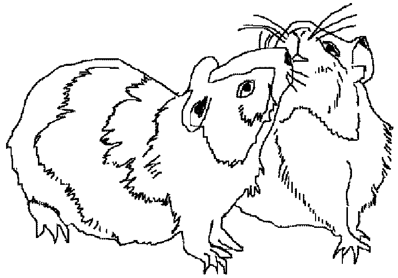 Coloriage Cochon Dinde 18500 Animaux Album De Coloriages