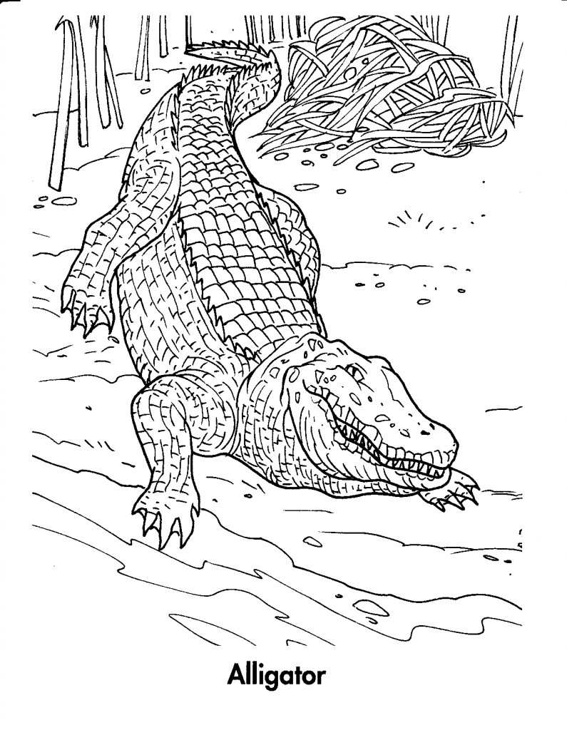 Coloriage Crocodile #4825 (Animaux) - Album de coloriages
