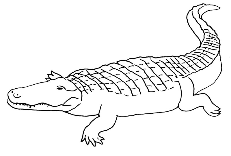 Coloriage Crocodile #4950 (Animaux) - Album de coloriages