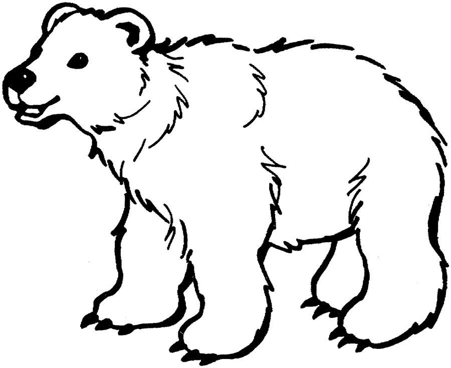 Coloriages Ours Animaux Album De Coloriages