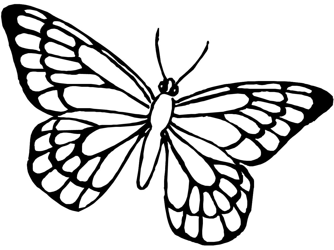 Coloriages Papillon (Animaux) - Album de coloriages