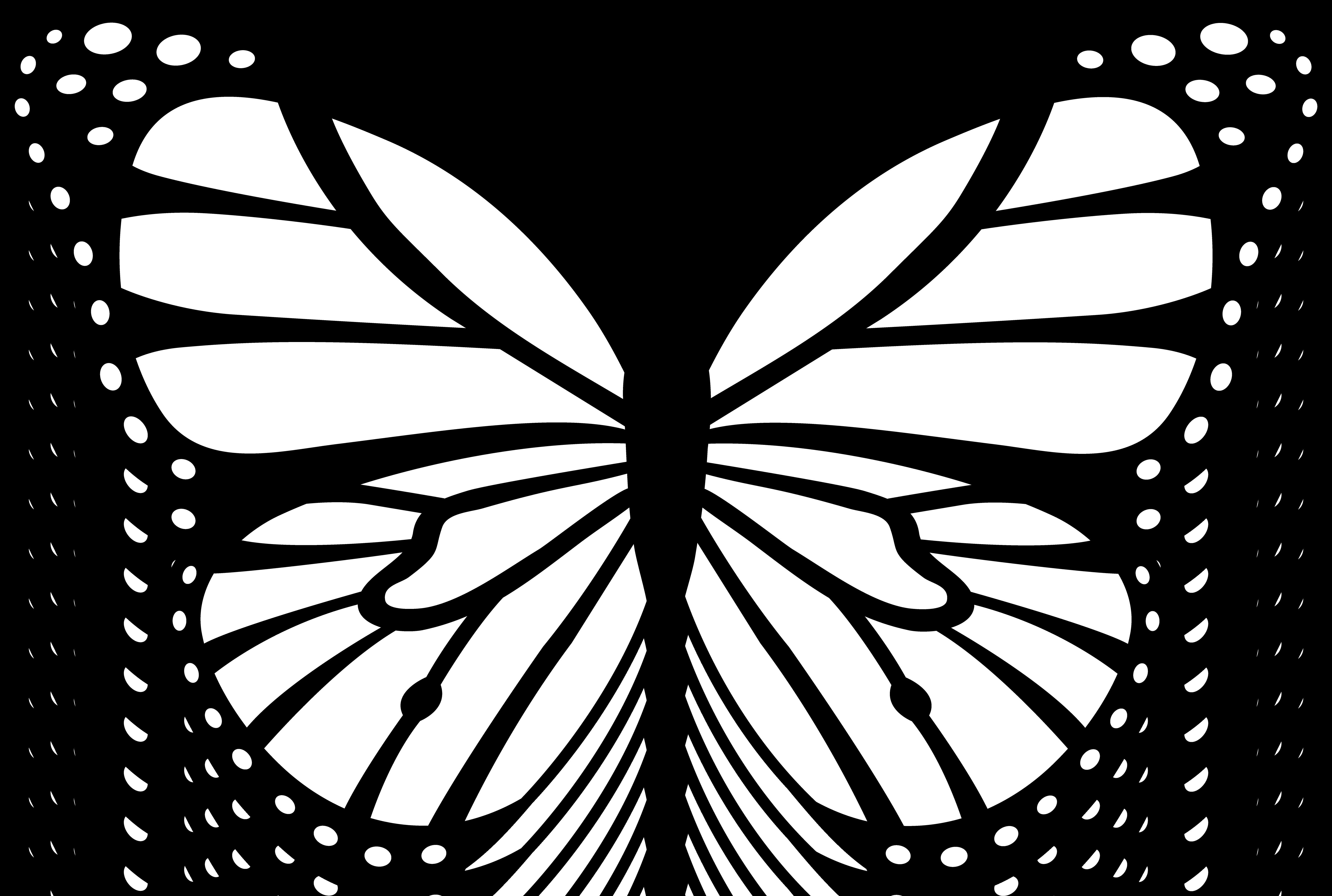 Coloriage Papillon #15834 (Animaux) - Album de coloriages