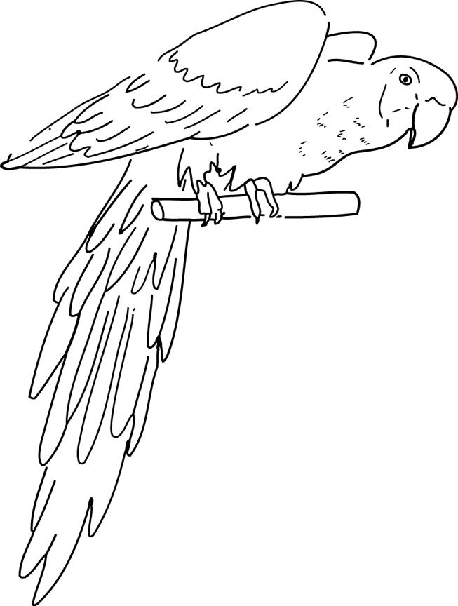 Coloriage Perroquet #24 (Animaux) - Coloriages à imprimer