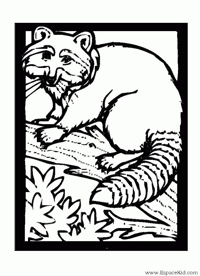 Coloriage Raton laveur #5 (Animaux) - Coloriages à imprimer