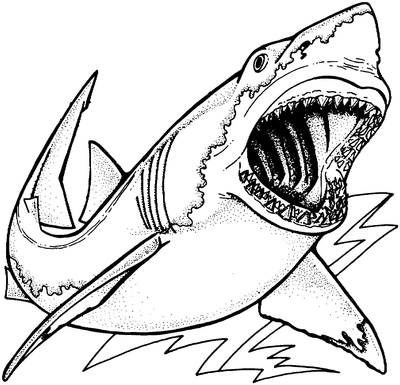 Coloriages Requin (Animaux) - Album de coloriages