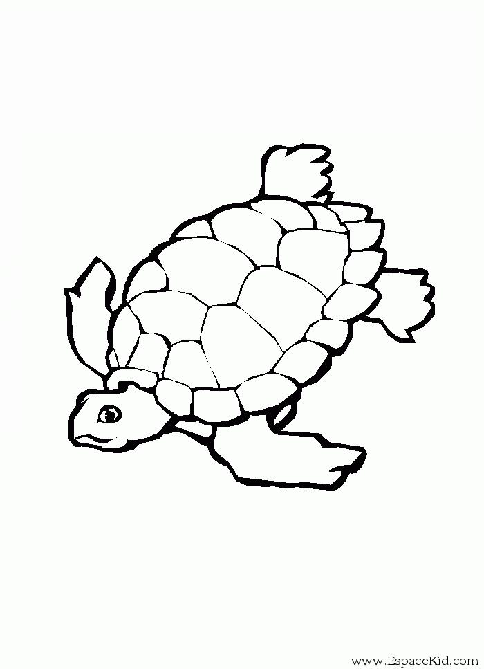 Coloriage Tortue #32 (Animaux) - Coloriages à imprimer
