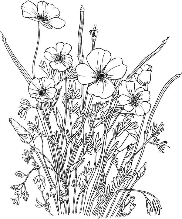 Coloriage Coquelicot #162521 (Nature) - Album de coloriages