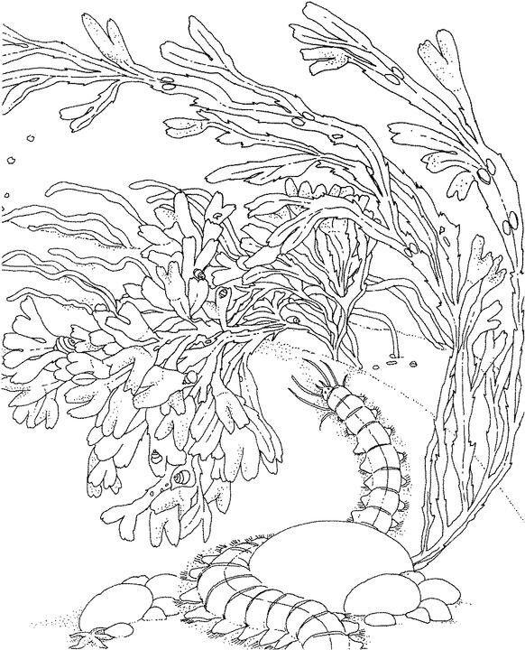 Coloriage Corail #162973 (Nature) - Album de coloriages