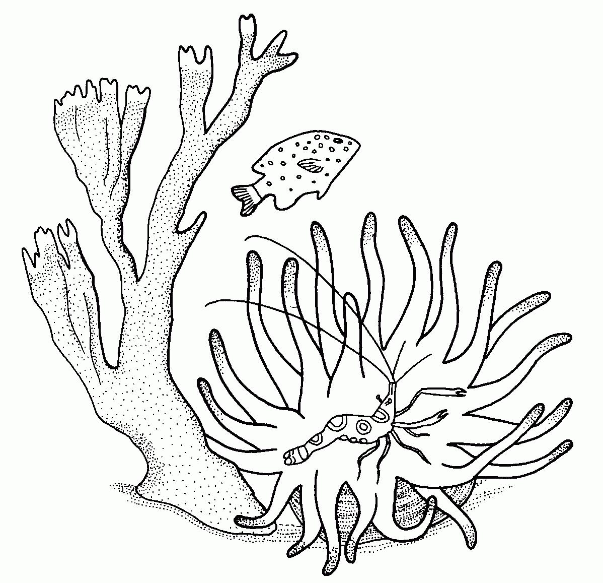 Coloriages Corail Nature Album De Coloriages