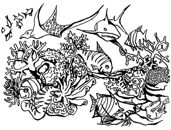Coloriage Corail #163066 (Nature) - Album de coloriages