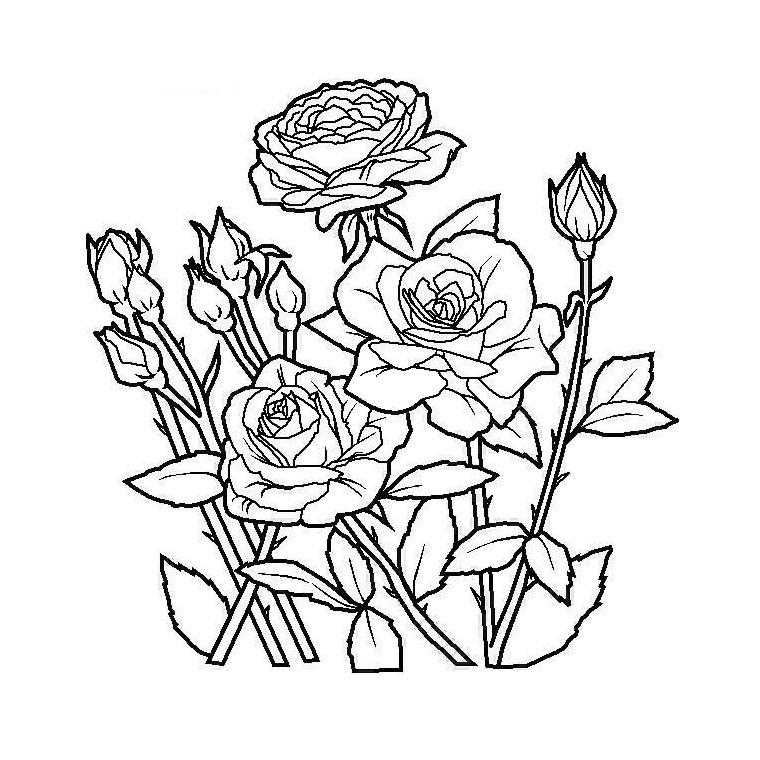 Coloriage Fleurs #154978 (Nature) - Album de coloriages