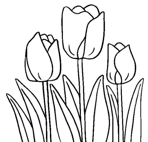 Coloriage Tulipe #161701 (Nature) - Album de coloriages