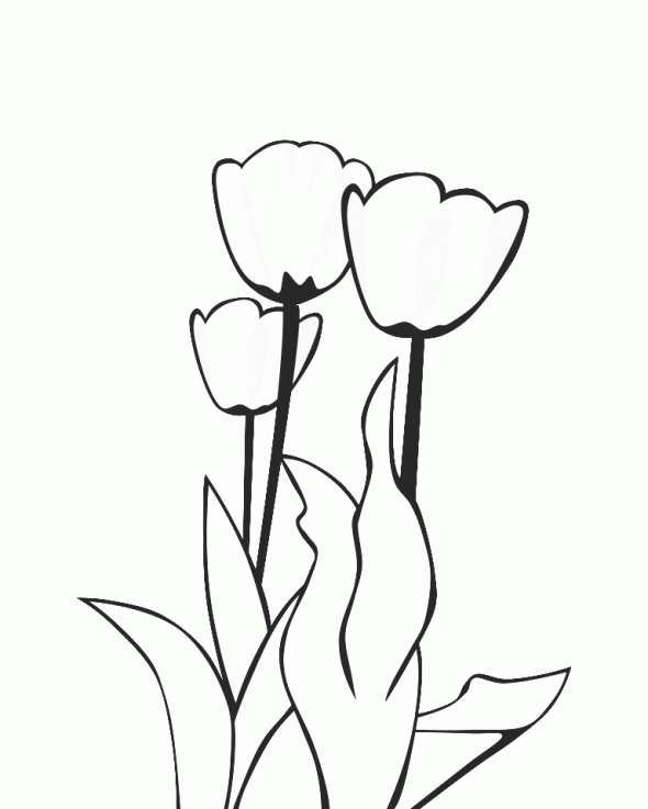 Coloriage Tulipe #90 (Nature) - Coloriages à imprimer